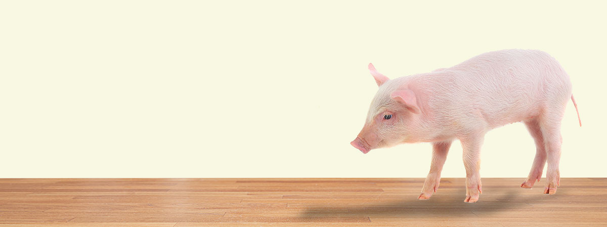 pig grower header image
