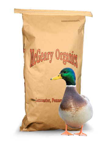 male duck feed
